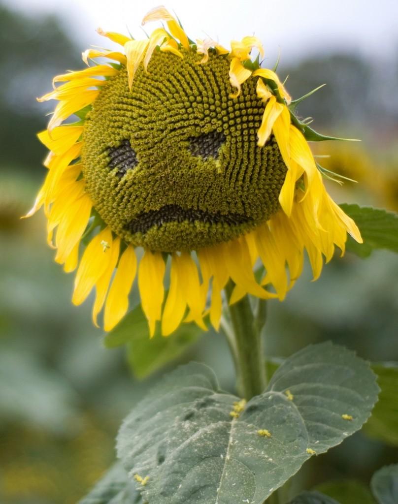 Anksiyete Ve Depresyon İçin Bitkisel Tedaviler: Anksiyete Ve Depresyona İyi Gelen Bitkiler